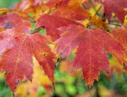 Spitzenzeiten im Frühling und Herbst