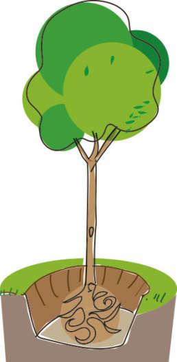 Die Pflanzgrube bei Bäumen sollte etwa anderthalb mal so gross sein wie der Wurzelballen.