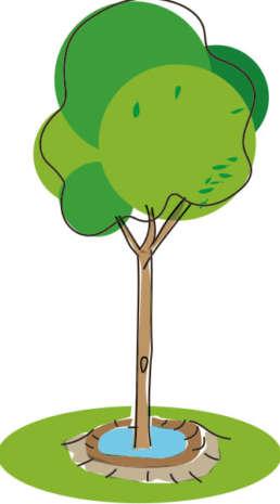 Der Baum wird senkrecht in der Mitte der Pflanzgrube platziert