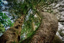 Bäume als natürliche Klimaanlage