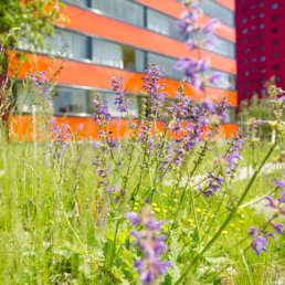 Bioterra Fachbetrieb Naturgarten