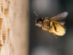 Wildbienenparadies auf dem Gelände der ETH