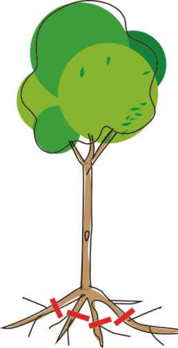 So können frisch gepflanzte Bäume gedeihen.