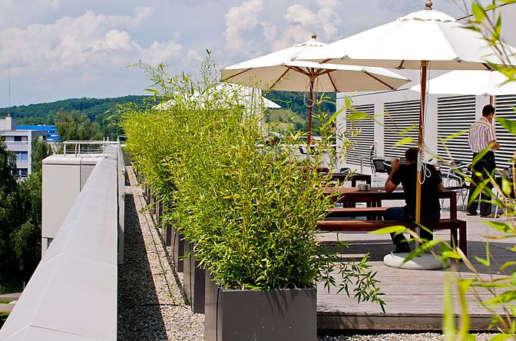 Dachgarten, Terrassen