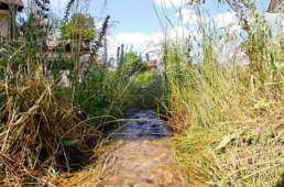 Biotop, Vogeltränke u.a. Wasser im Garten