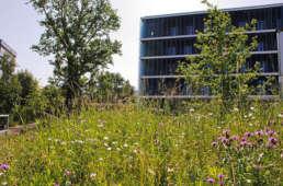Naturgarten Bioterra Fachbetrieb, Region Zürich