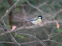 Ein Vogelhäuschen im Garten
