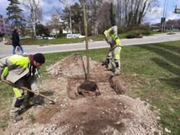 Lernendenprojekt Baum pflanzen