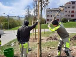 Lernendenprojekt Baumschutz