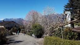 Magnolienblüte im Parco Botanico