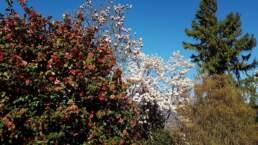 Magnolien und Kamelien