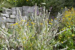 Biodiversität Trockenmauer