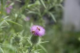 Biodiversität Wildbienen
