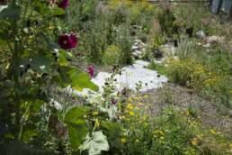 Biodiversität Trockeninsel